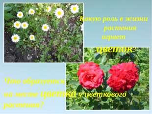 Что образуется на месте цветка у цветкового растения? Какую роль в жизни раст