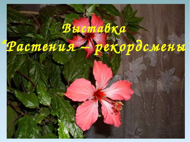 """Выставка """"Растения – рекордсмены"""""""