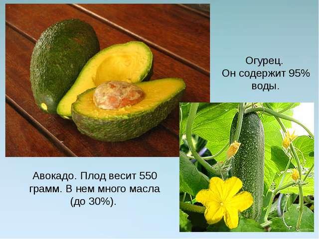 Авокадо. Плод весит 550 грамм. В нем много масла (до 30%). Огурец. Он содержи...
