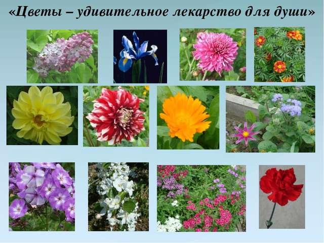 «Цветы – удивительное лекарство для души»