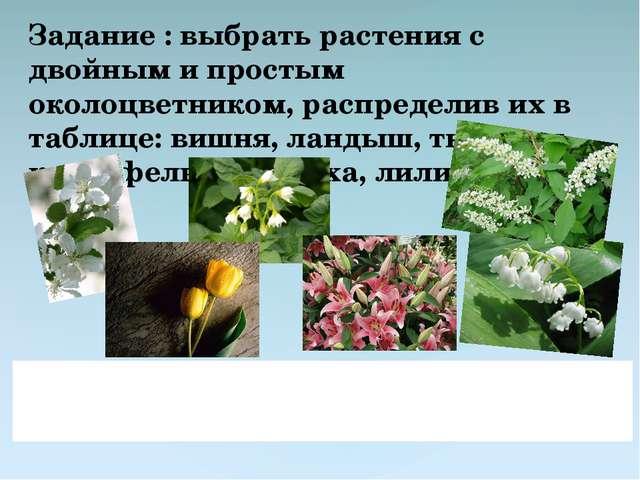 Задание : выбрать растения с двойным и простым околоцветником, распределив их...
