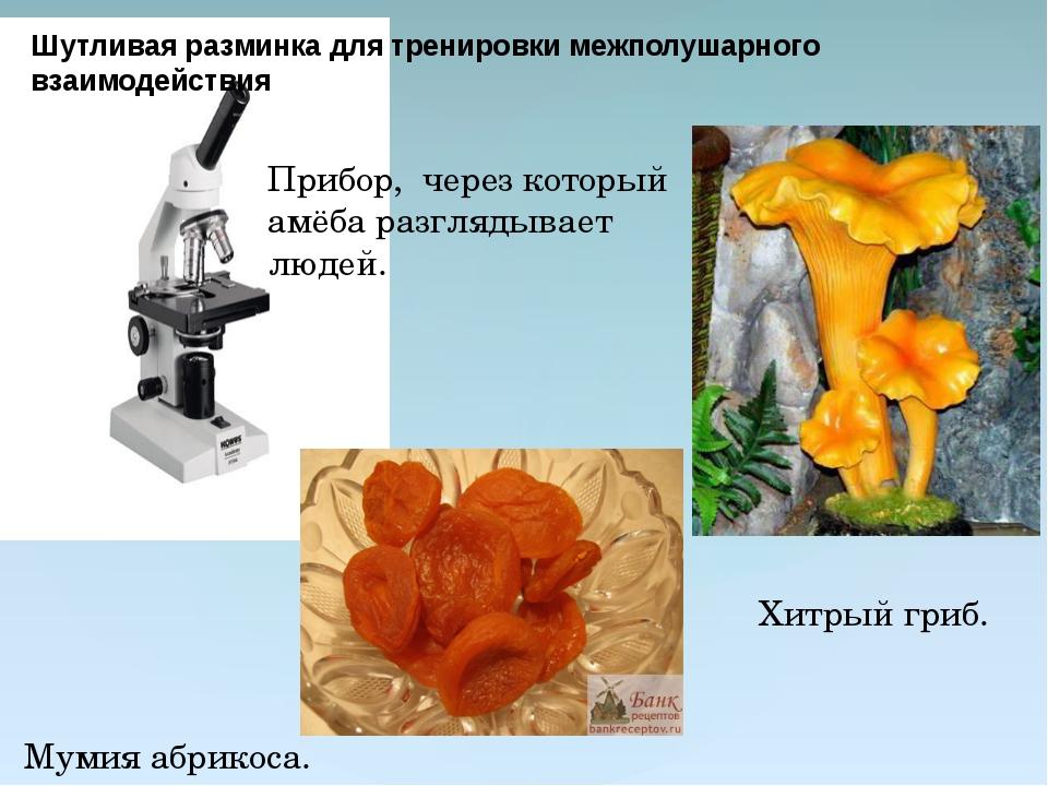 Прибор, через который амёба разглядывает людей.  Мумия абрикоса. Хитрый гриб...