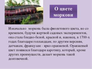 Изначально морковь была фиолетового цвета, но со временем, будучи жертвой сад