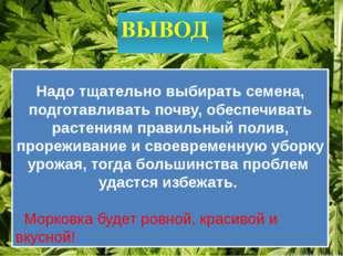 ВЫВОД Надо тщательно выбирать семена, подготавливать почву, обеспечивать раст