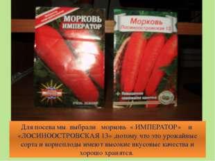 Для посева мы выбрали морковь « ИМПЕРАТОР» и «ЛОСИНООСТРОВСКАЯ 13» ,потому чт