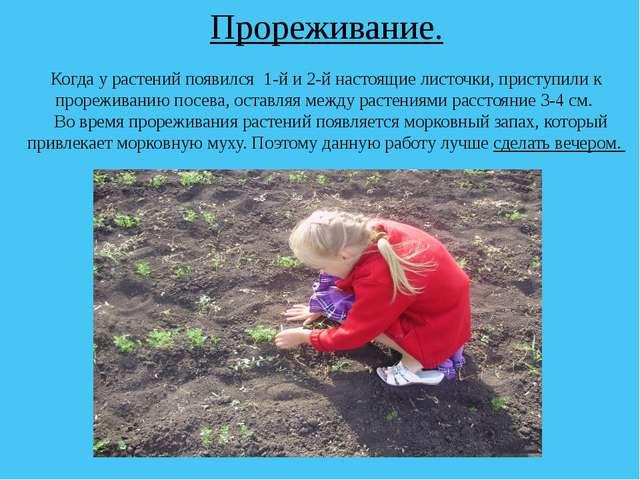 Прореживание. Когда у растений появился 1-й и 2-й настоящие листочки, приступ...