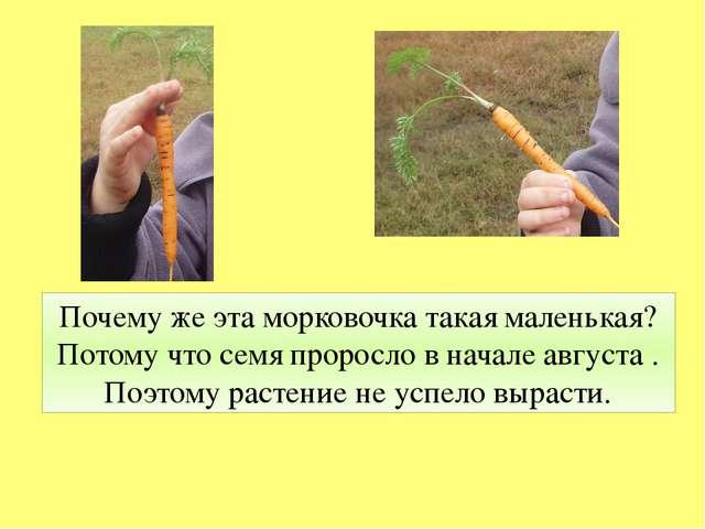Почему же эта морковочка такая маленькая? Потому что семя проросло в начале а...