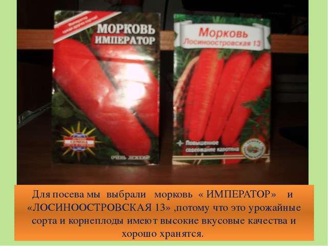 Для посева мы выбрали морковь « ИМПЕРАТОР» и «ЛОСИНООСТРОВСКАЯ 13» ,потому чт...