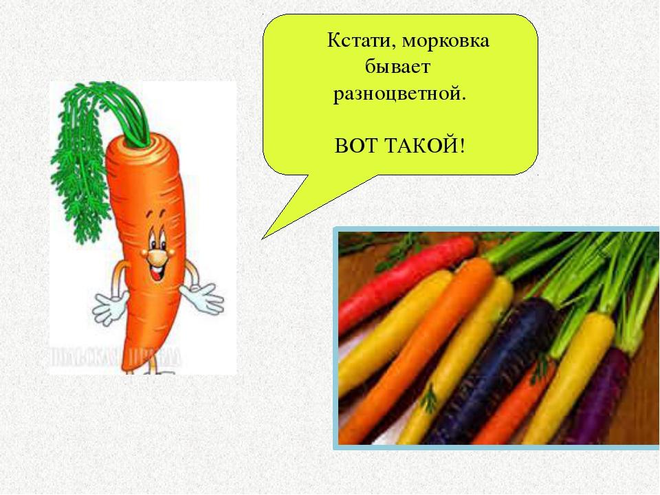 Кстати, морковка бывает разноцветной. ВОТ ТАКОЙ!