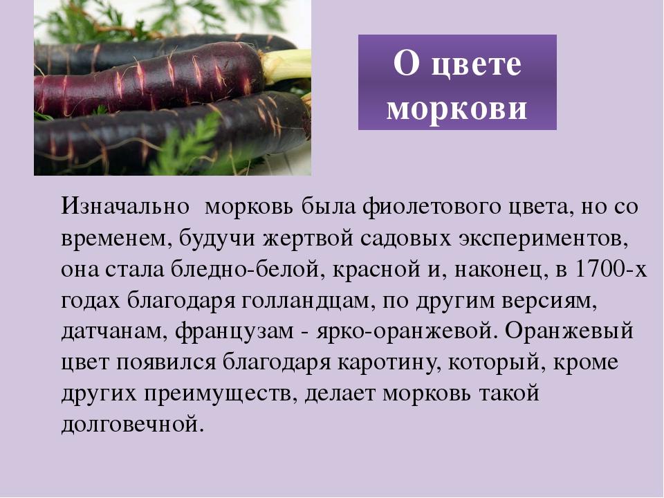 Изначально морковь была фиолетового цвета, но со временем, будучи жертвой сад...