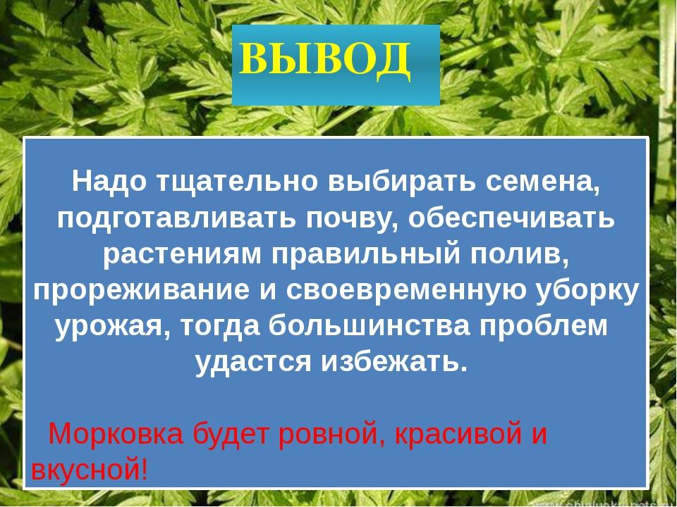 ВЫВОД Надо тщательно выбирать семена, подготавливать почву, обеспечивать раст...