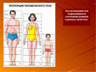 Под пропорциями тела подразумеваются соотношения размеров отдельных частей те