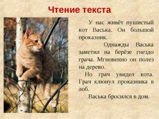 У нас живёт пушистый кот Васька. Он большой проказник. Однажды Васька зам