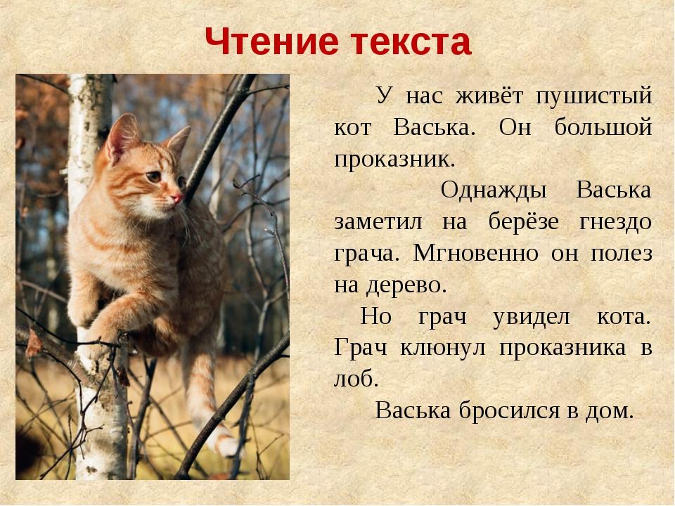 У нас живёт пушистый кот Васька. Он большой проказник. Однажды Васька зам...