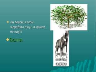 За лесом, лесом жеребята ржут, а домой не идут? Волки.