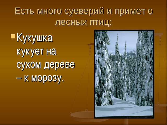Есть много суеверий и примет о лесных птиц: Кукушка кукует на сухом дереве –...
