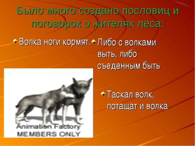 Было много создано пословиц и поговорок о жителях леса: Волка ноги кормят. Ли...