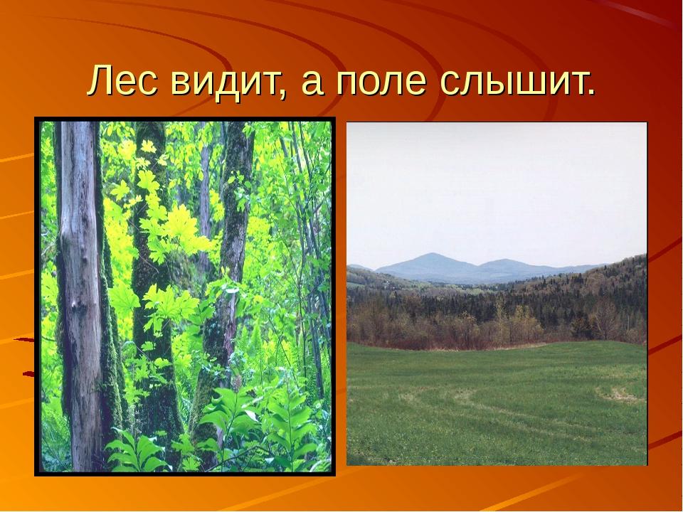 Лес видит, а поле слышит.