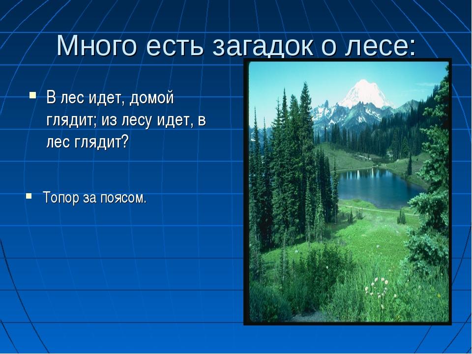 Много есть загадок о лесе: В лес идет, домой глядит; из лесу идет, в лес гляд...