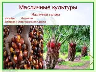Масличные культуры Масличная пальма Малайзия Индонезия Западная и Экваториаль