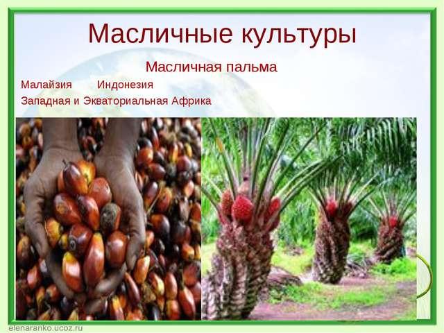 Масличные культуры Масличная пальма Малайзия Индонезия Западная и Экваториаль...