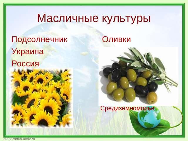 Масличные культуры Подсолнечник Оливки Украина Россия Средиземноморье