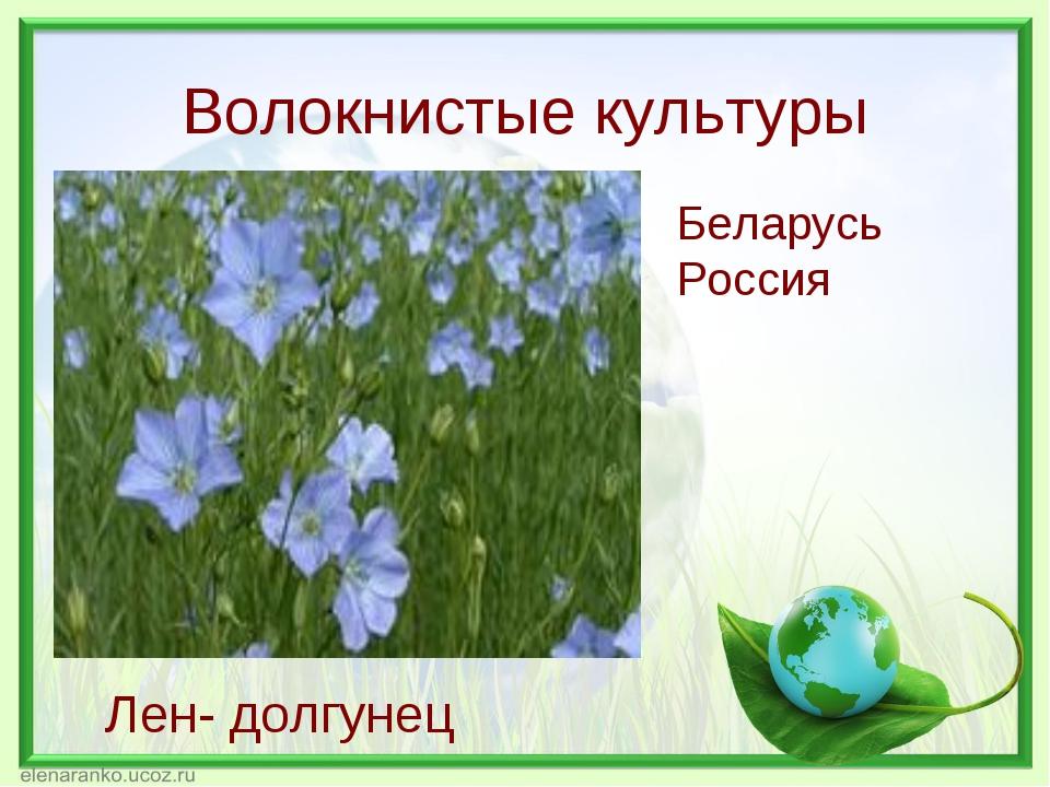 Волокнистые культуры Лен- долгунец Беларусь Россия