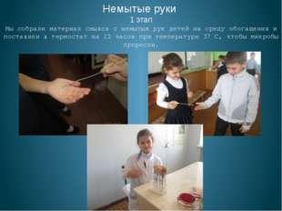 Немытые руки 1 этап Мы собрали материал смывов с немытых рук детей на среду