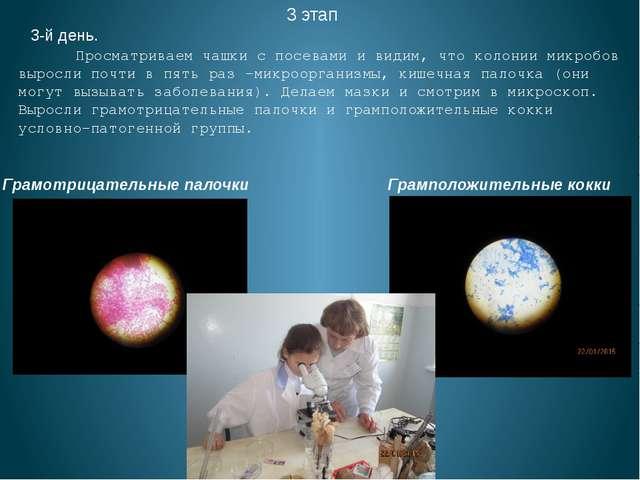 3 этап 3-й день. Просматриваем чашки с посевами и видим, что колонии микробов...
