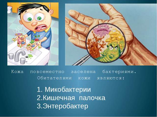 Кожа повсеместно заселена бактериями. Обитателями кожи являются: 1. Микобакт...