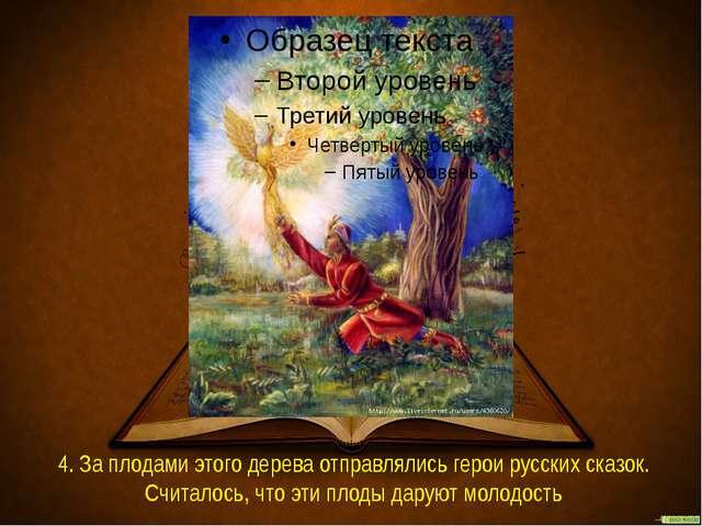 4. За плодами этого дерева отправлялись герои русских сказок. Считалось, что...