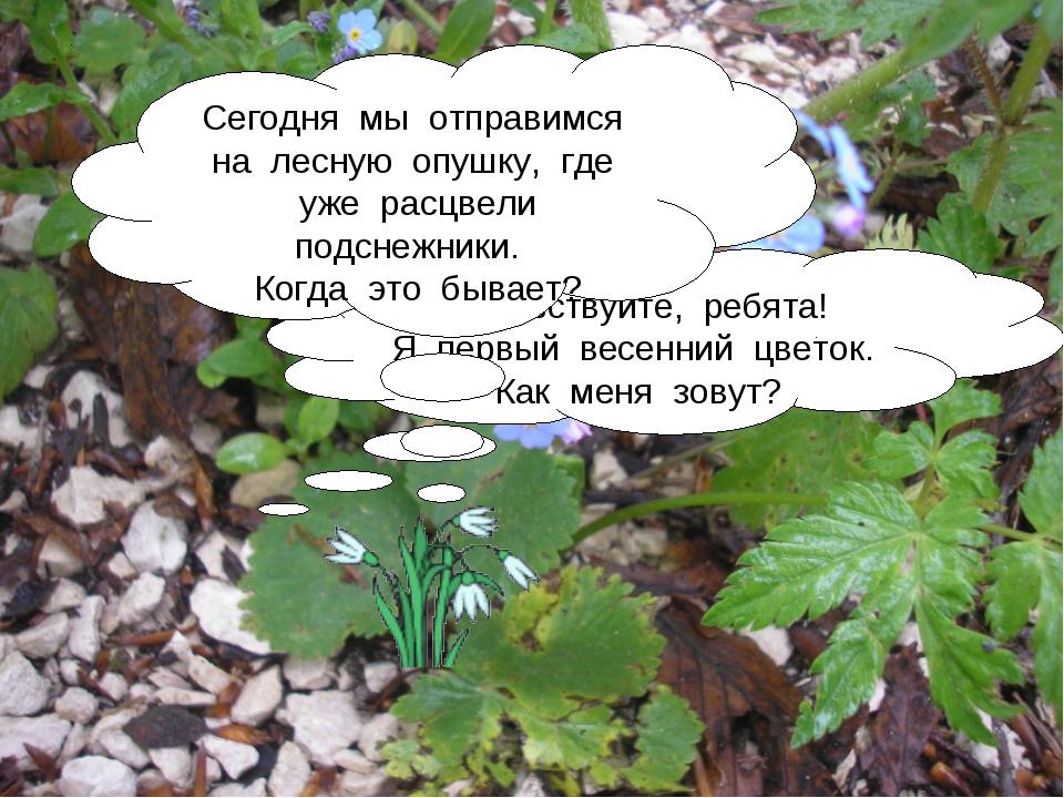 Здравствуйте, ребята! Я первый весенний цветок. Как меня зовут? Сегодня мы от...