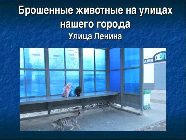Брошенные животные на улицах нашего города Улица Ленина