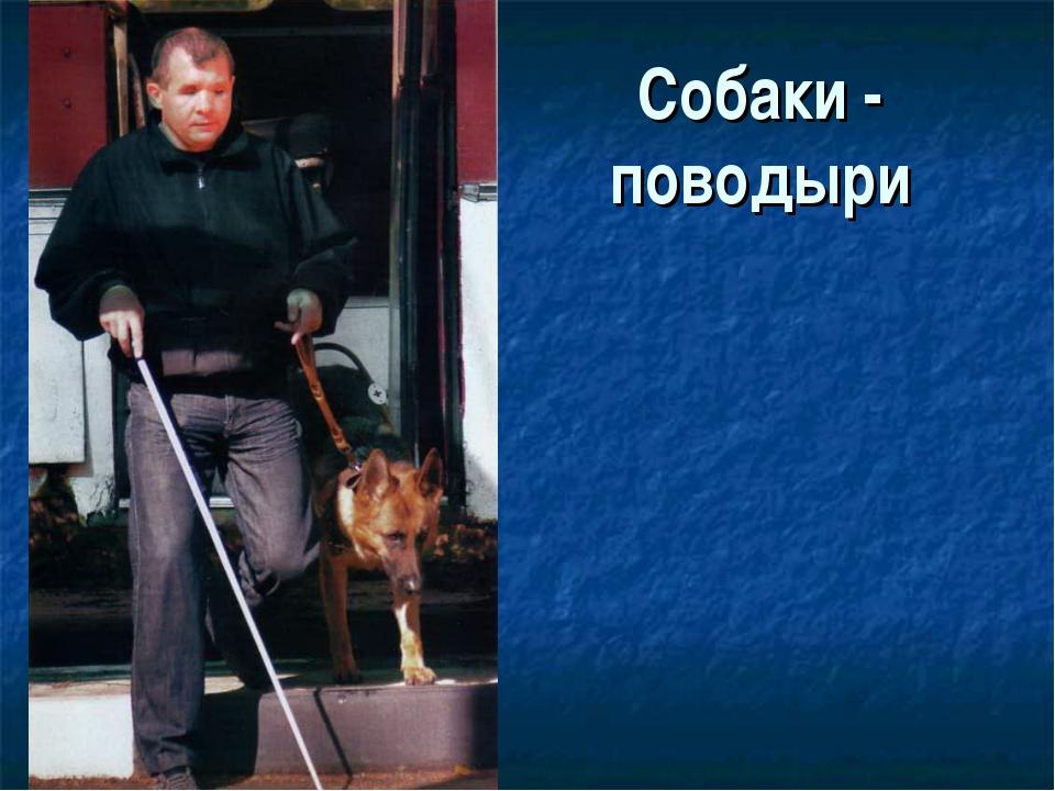 Собаки - поводыри
