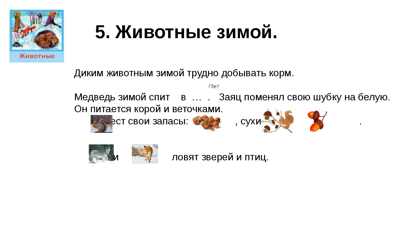 5. Животные зимой. Диким животным зимой трудно добывать корм. Где? Медведь зи...