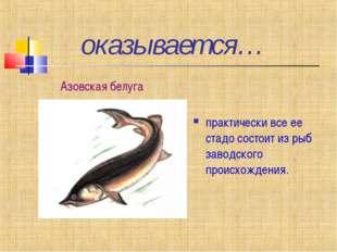 оказывается… практически все ее стадо состоит из рыб заводского происхождени
