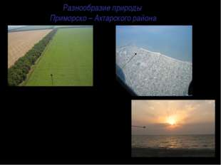 Разнообразие природы Приморско – Ахтарского района  Говоря и думая о нашем р