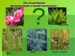 Все ли растения произрастают в нашей местности ? Портулак папоротник Пырей по