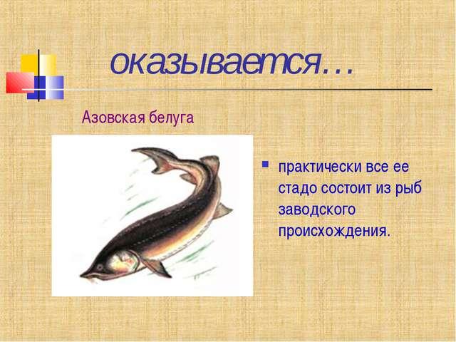 оказывается… практически все ее стадо состоит из рыб заводского происхождени...