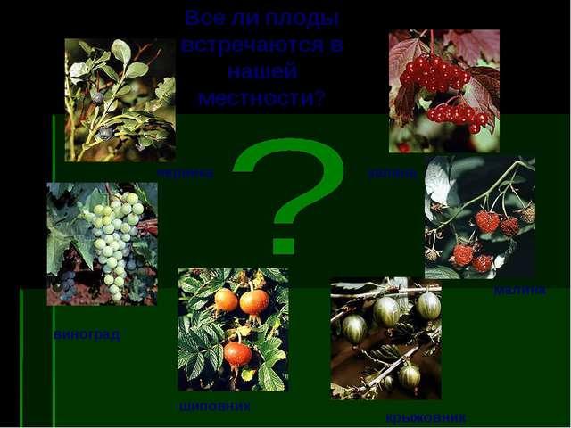 черника калина виноград шиповник малина крыжовник Все ли плоды встречаются в...