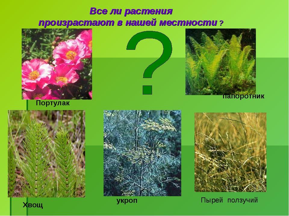 Все ли растения произрастают в нашей местности ? Портулак папоротник Пырей по...