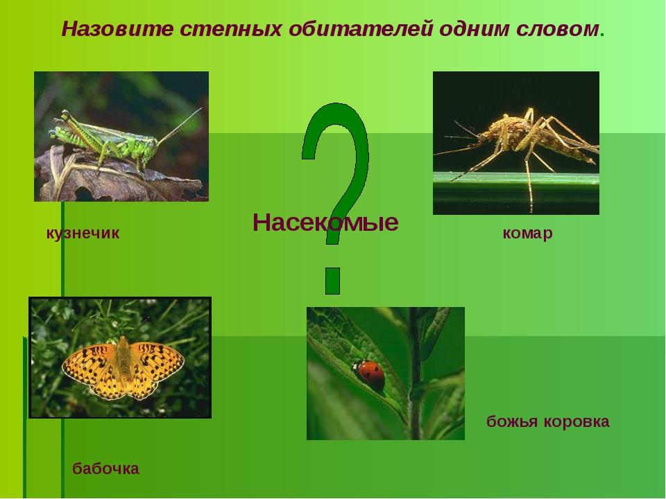 Назовите степных обитателей одним словом. бабочка божья коровка комар кузнечи...