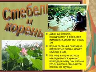 * * Длинные стебли, находящиеся в воде, при измерении достигают около 1м. Кор