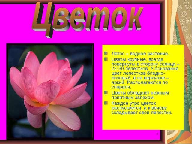 * * Лотос – водное растение. Цветы крупные, всегда повернуты в сторону солнца...