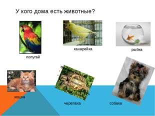 У кого дома есть животные? черепаха попугай канарейка рыбка кошка собака