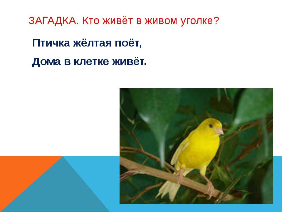 ЗАГАДКА. Кто живёт в живом уголке? Птичка жёлтая поёт, Дома в клетке живёт.