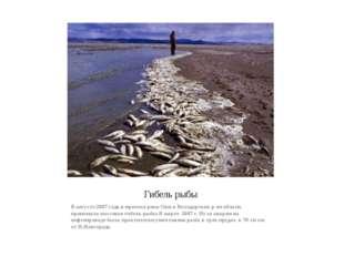 Гибель рыбы В августе 2007 года в притоке реки Оки в Володарском р-не облати,