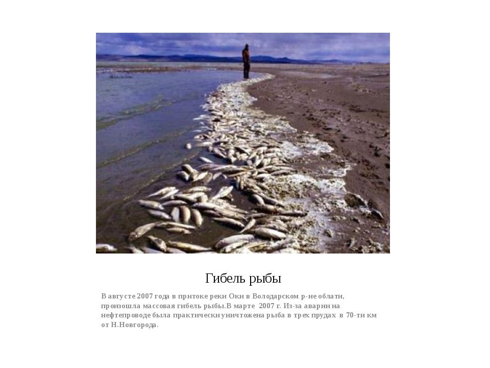 Гибель рыбы В августе 2007 года в притоке реки Оки в Володарском р-не облати,...