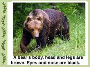 A bear's body, head and legs are brown. Eyes and nose are black. FokinaLida.7