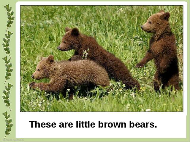 These are little brown bears. FokinaLida.75@mail.ru
